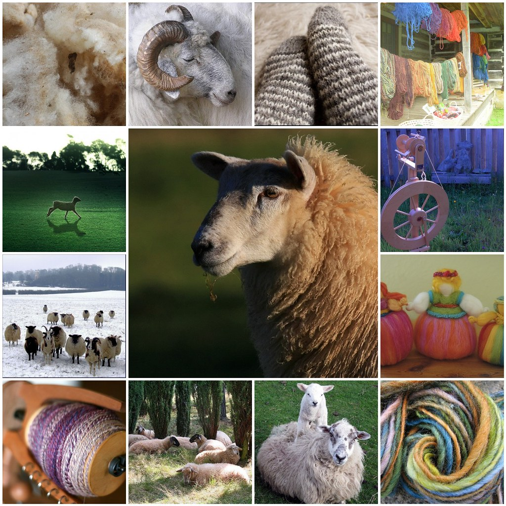 Collage of sheep and wool
